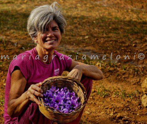 raccolta fiori felicità_zafferanoalghero