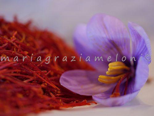 Maria-Grazia-Meloni-9-500x375